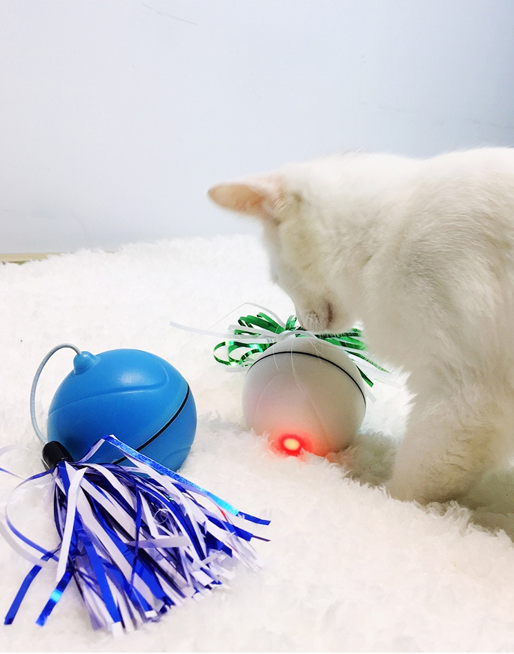 Top 5 New Toys For Your Pet Cat In 2019 You Wish You Had Catsimply