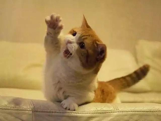 Lifespan cat-Weight