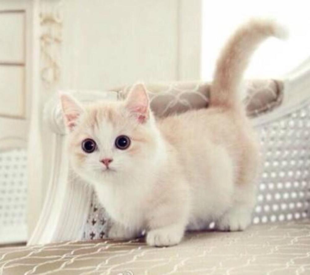 Cats Life Span